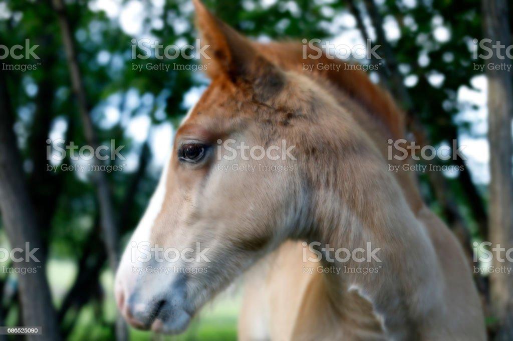 Foal foto stock royalty-free