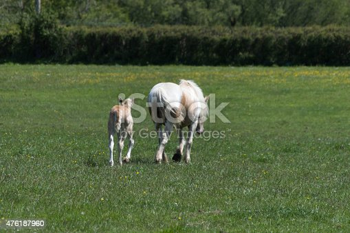 Image of a young foal with his mother walking side by side through a green field