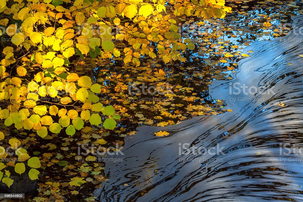 Foam floating on the water at autumn colored branches royalty-free stock photo