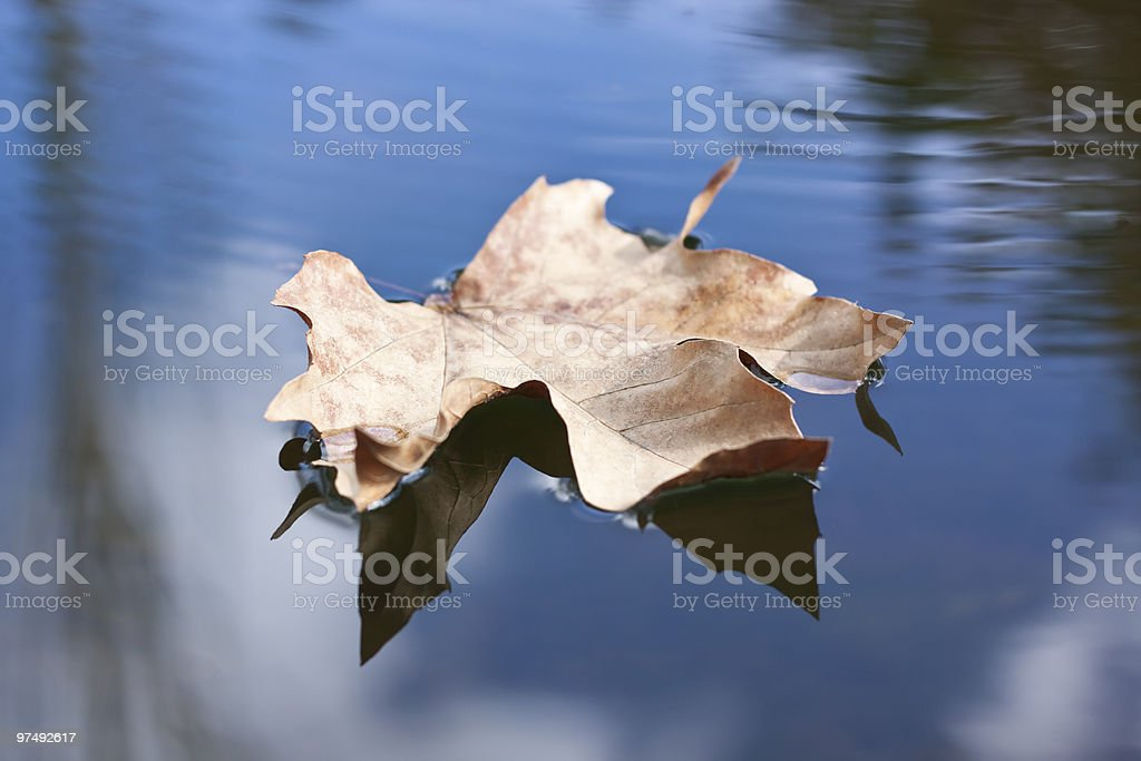 foating leaf royalty-free stock photo