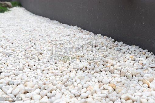 focus at white pebbles  decoration in garden.