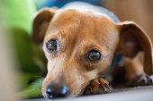 犬の目に焦点