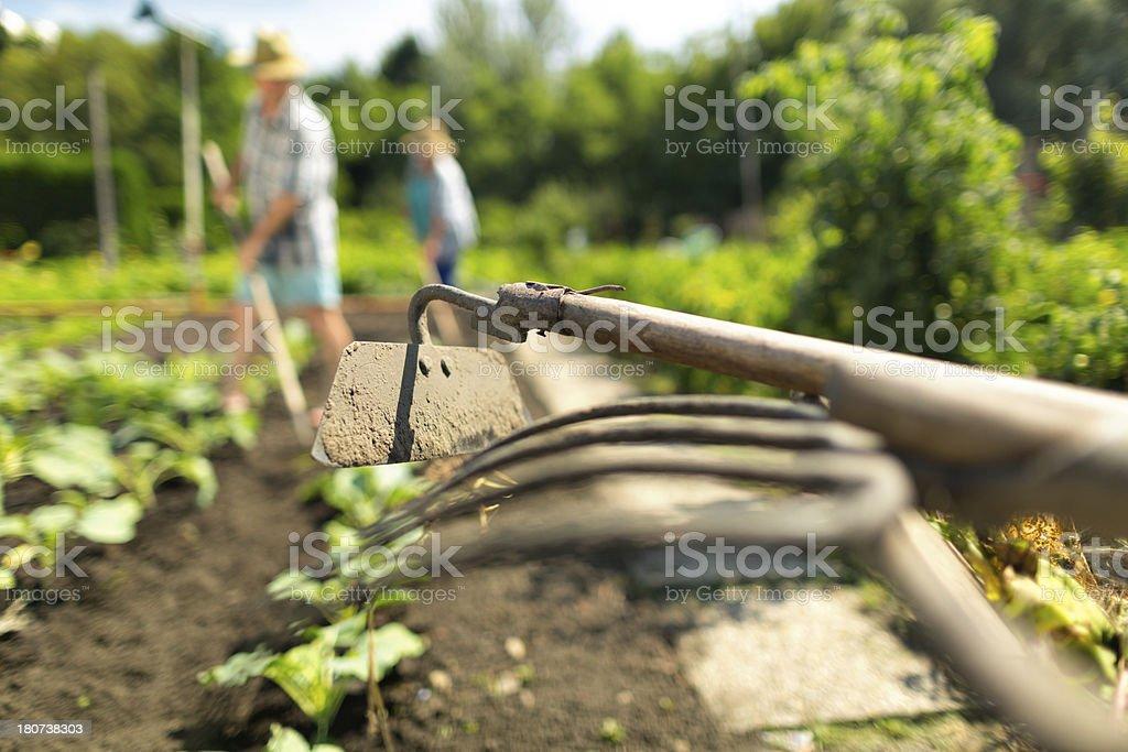 Focus On Gardening Tools In Vegetable Garden Stock Photo
