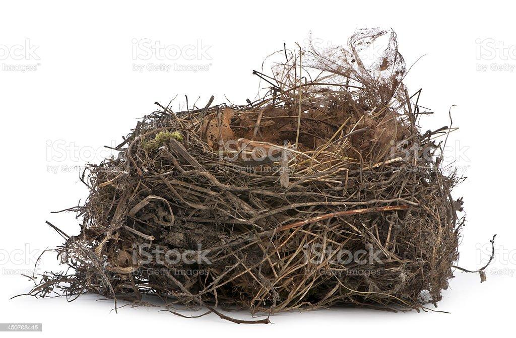 Focus stacking, a Nest of Common Blackbird stock photo