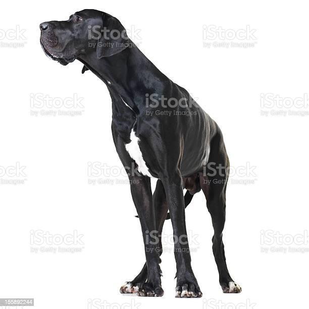 Focused on being a great watchdog picture id155892244?b=1&k=6&m=155892244&s=612x612&h=igoge9wydl6dlwdigxgnsz5ts kgqjnkoqqrhbi2gro=