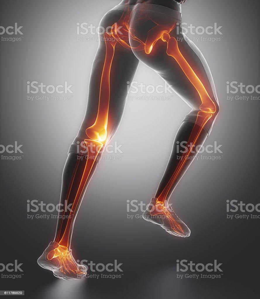 Focused On Leg Bones Anatomy Stock Photo More Pictures Of Achilles