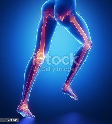 istock Focused on leg bones anatomy 611786642