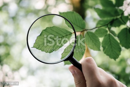A magnifying glass over a tree leaf