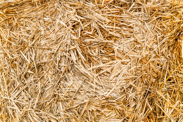 Fodder for livestock and construction material. stock photo