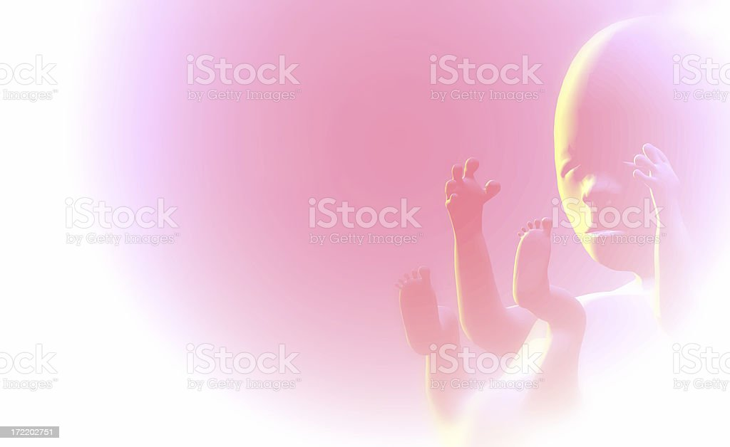 Foetus (fetus) royalty-free stock photo