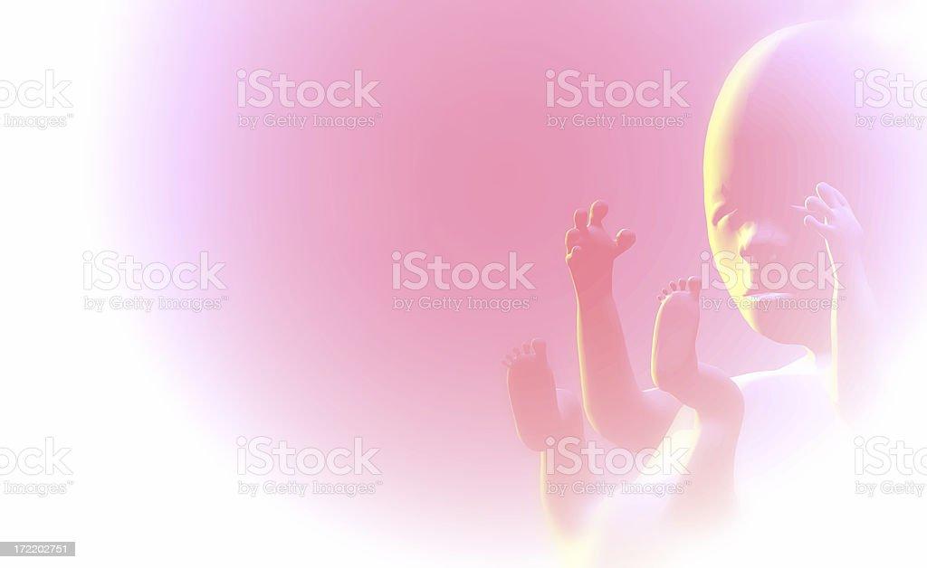 Foetus (fetus) stock photo
