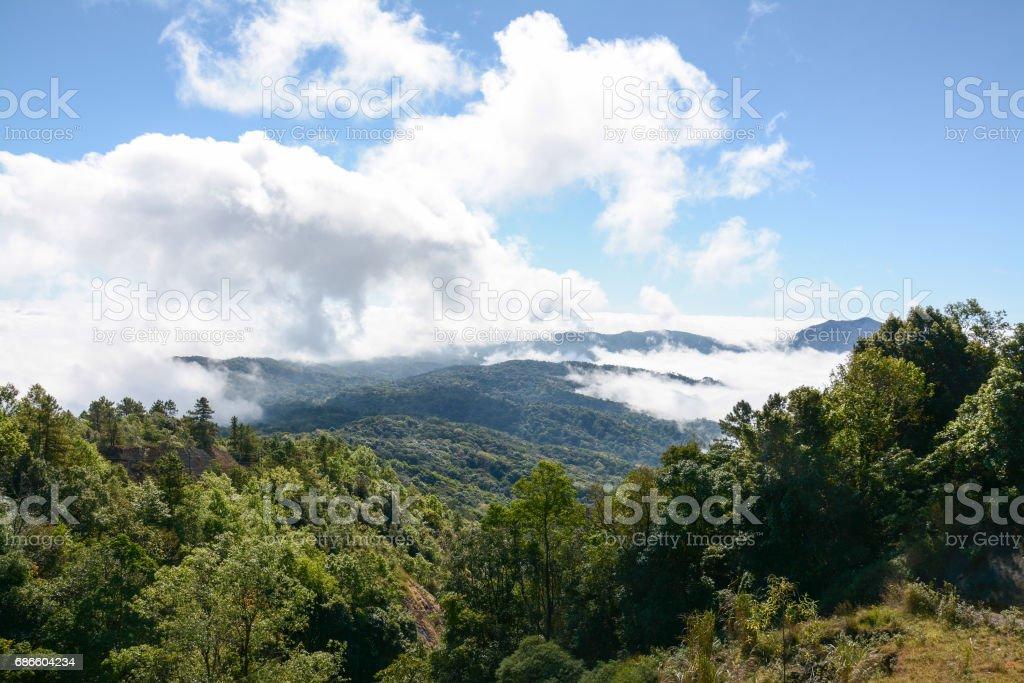 fog and cloud  on mountain at Kew Mae Pan ,Doi Inthanon National Park, Thailand. royalty-free stock photo