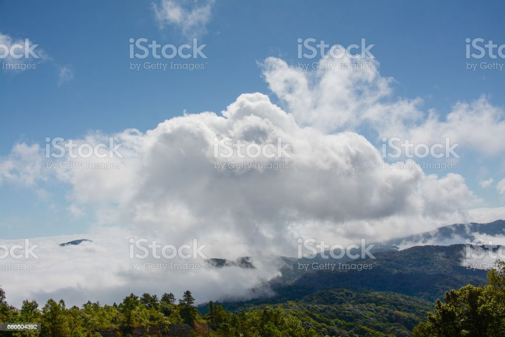 fog and cloud  on mountain at Kew Mae Pan ,Doi Inthanon National Park, Thailand. photo libre de droits