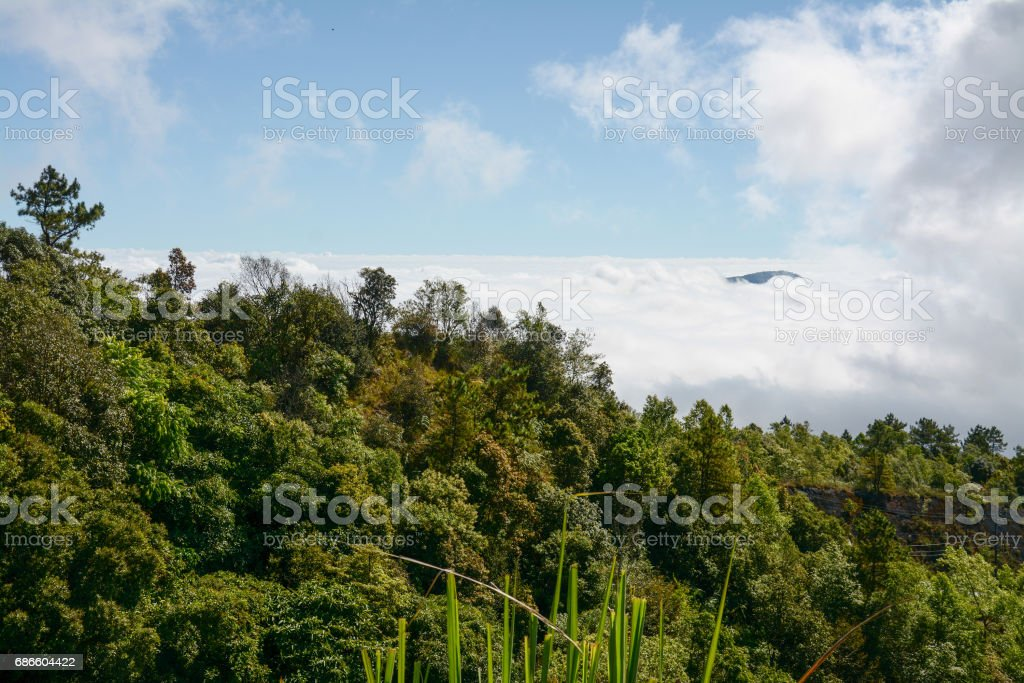 fog and cloud  on mountain at Kew Mae Pan ,Doi Inthanon National Park, Thailand. royalty-free stock photo