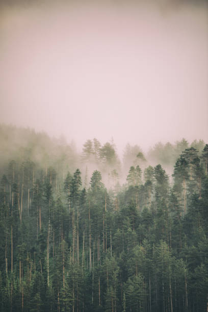 Fog and clouds on mountain stock photo