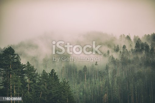 Beautiful landscape with fog and low clouds on mountain range and forest