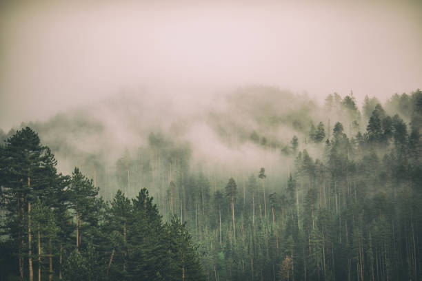 Fog and clouds on mountain Beautiful landscape with fog and low clouds on mountain range and forest forest stock pictures, royalty-free photos & images