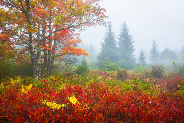 Fog and fall colors, West Virginia stock photo