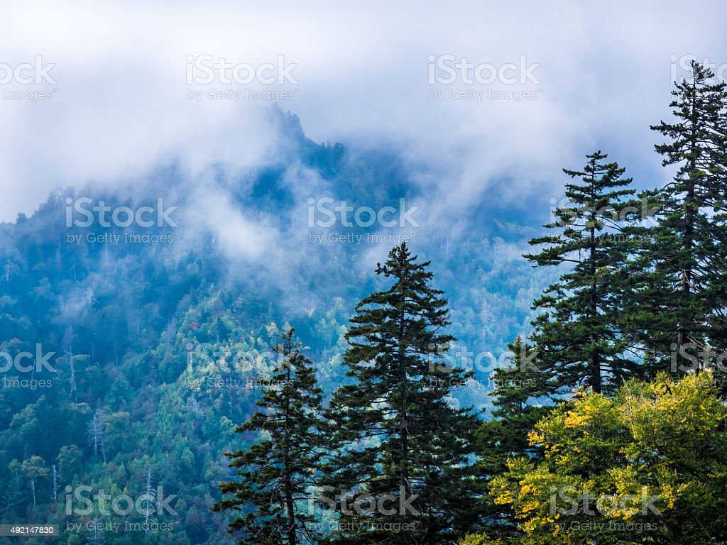 Fog and Firs from Morton Overlook stock photo