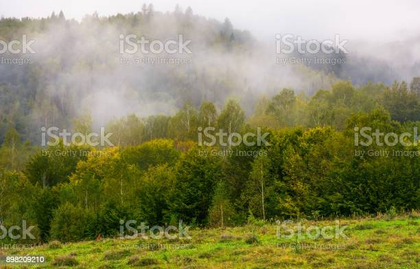 Photo of fog and low clouds over the forested mountains