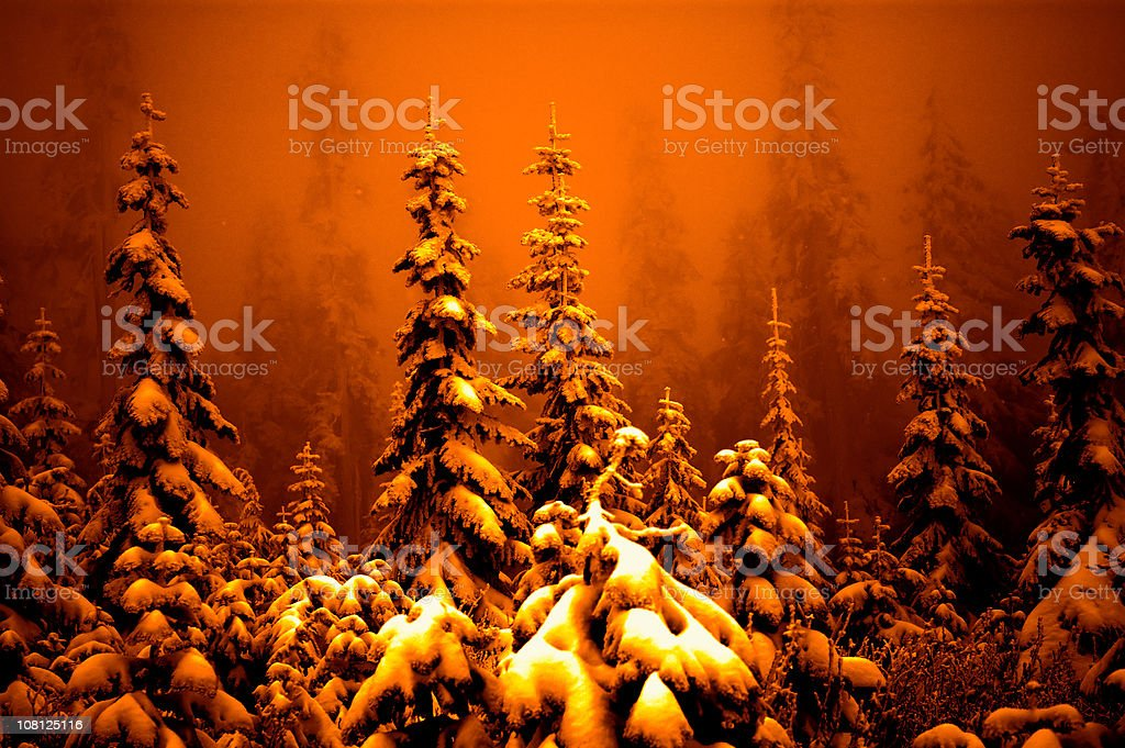 Fog and Snow Covering Pine Trees in Forest, Orange Toned royalty-free stock photo