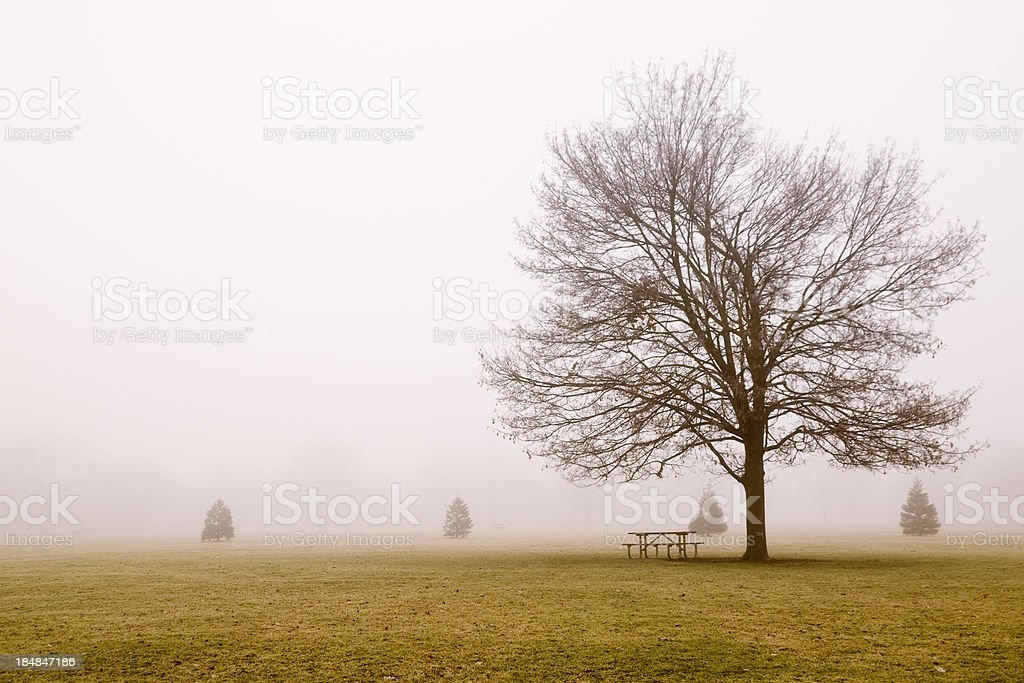 Fog and trees Hz royalty-free stock photo