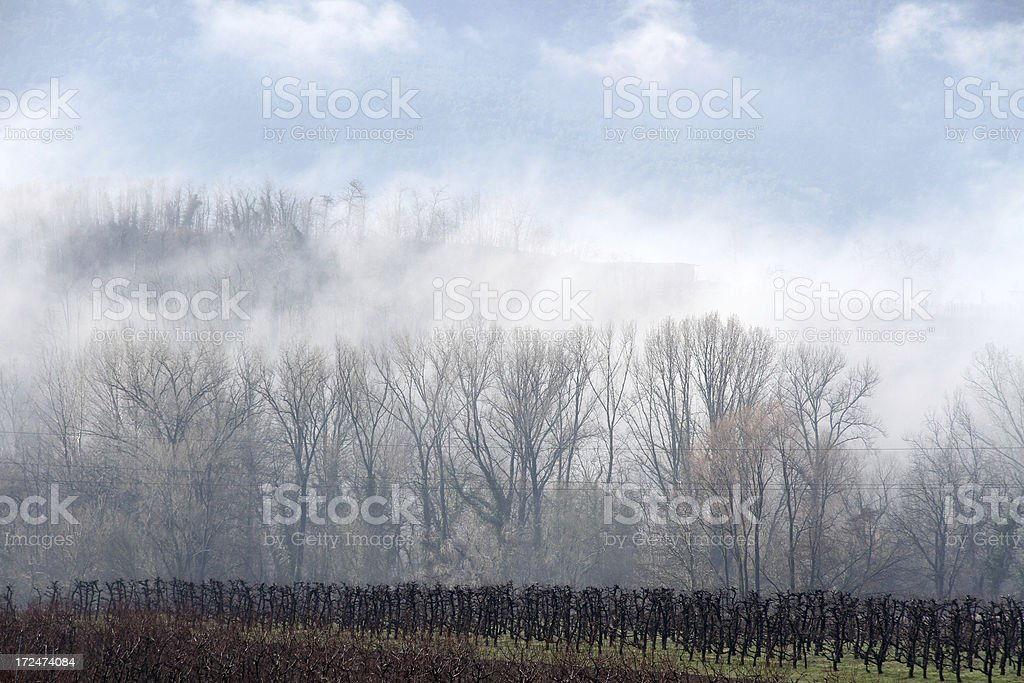 fog and trees royalty-free stock photo