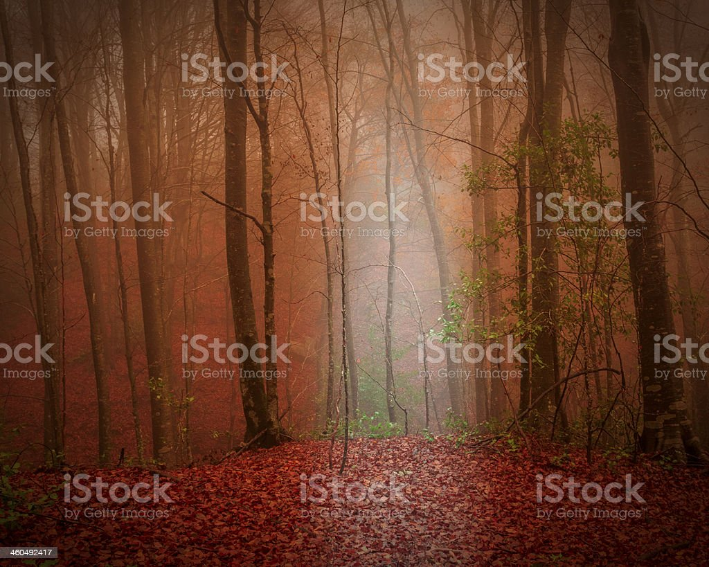 Fog at forest stock photo