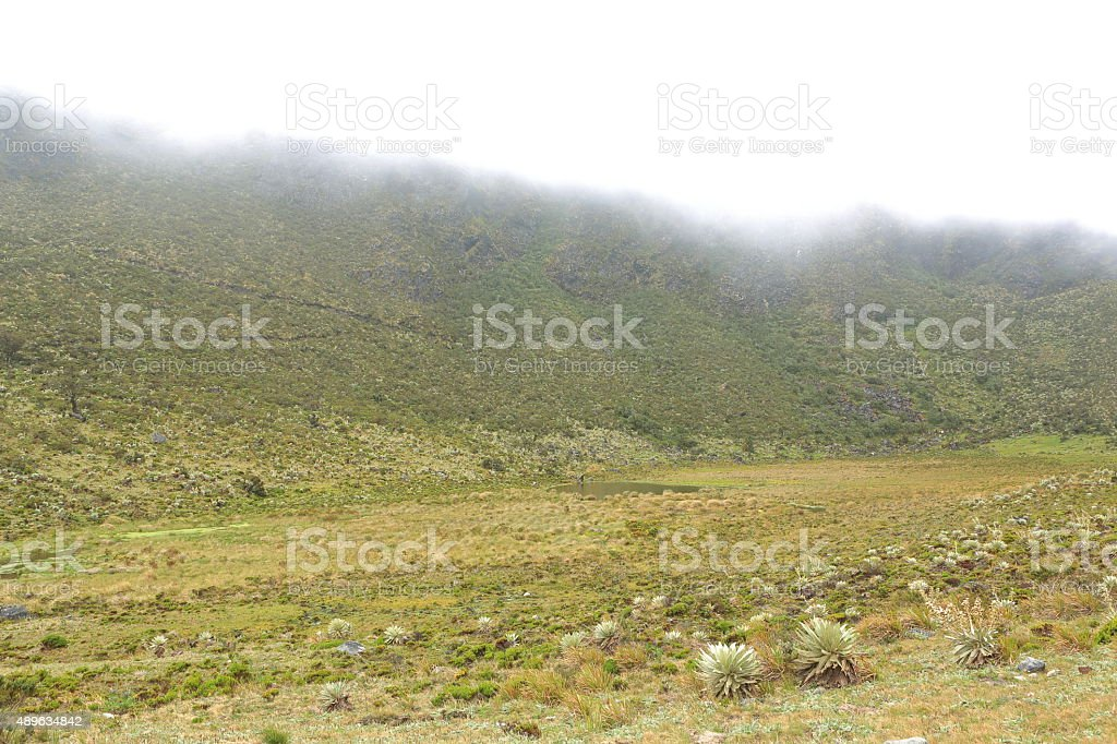Fog Falling Dowm over High Mountain Moorland in Tachira stock photo