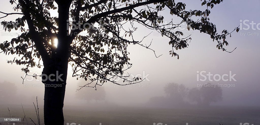 Fog in autum morning royalty-free stock photo