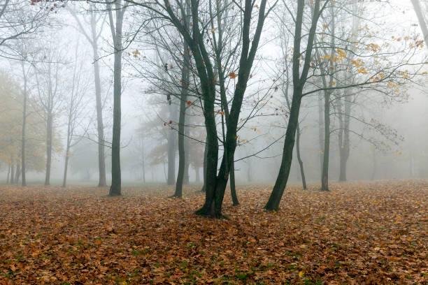 nebel im herbst - stockwerke des waldes stock-fotos und bilder