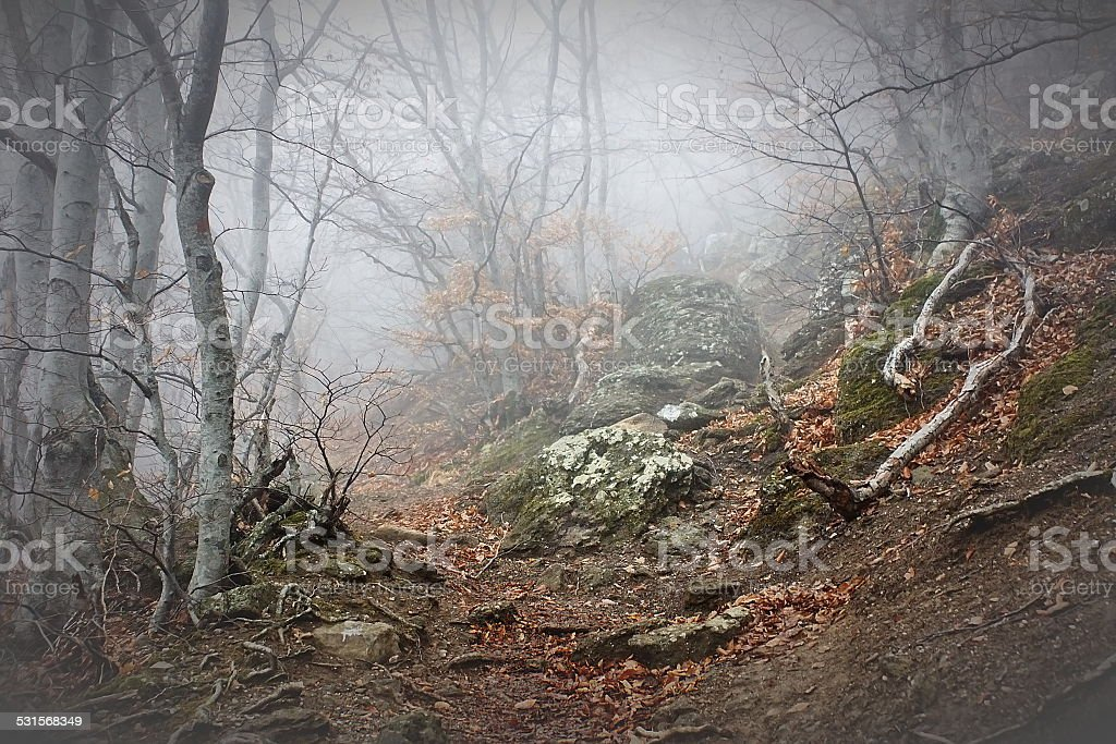 Fog in beech forest in the mountains stock photo