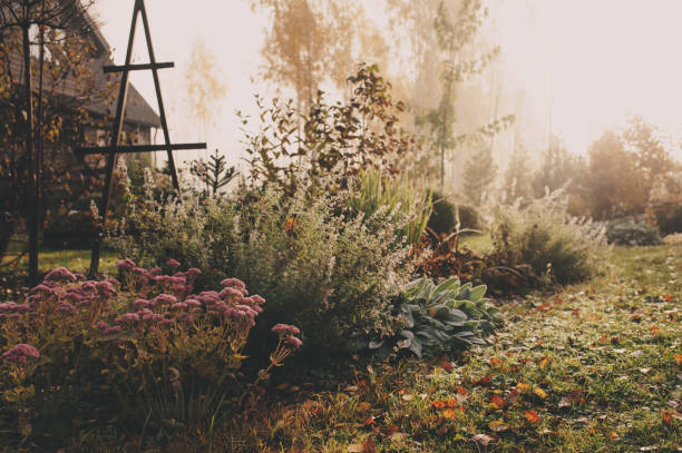 fog in early morning in late autumn or winter garden. Frosty beautiful rural view with pathway, lawn and plants. stock photo