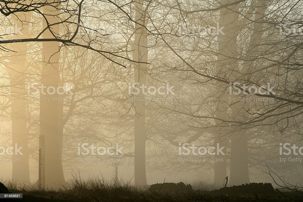Fog in England wood royalty-free stock photo