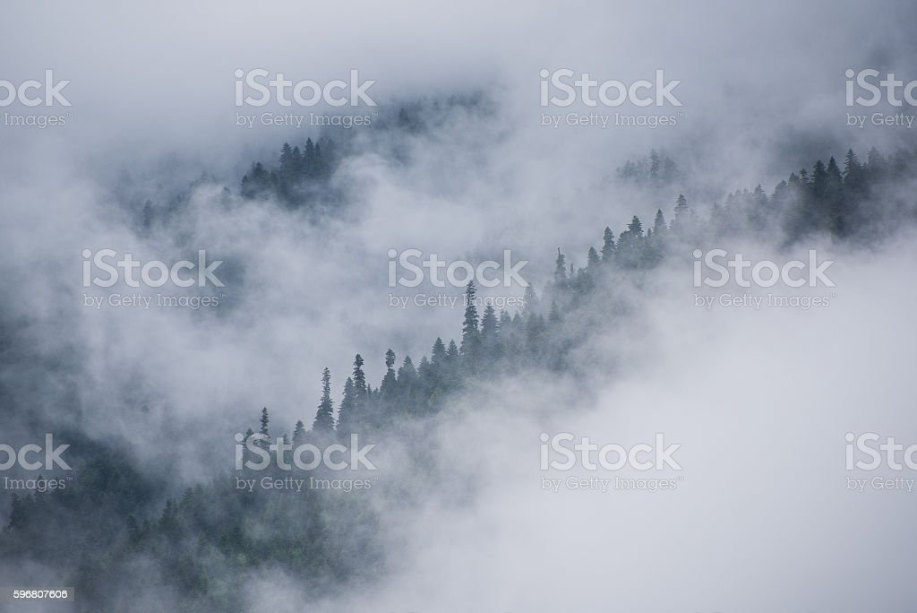 Fog in mountains. Forest in a cloud. Zen-like nature background – Foto