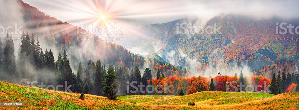 Fog in the autumn stock photo