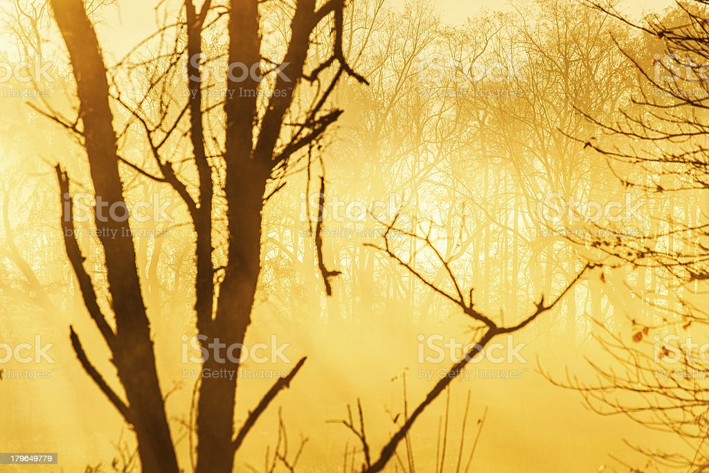 Fog in the forest at Sunrise royalty-free stock photo