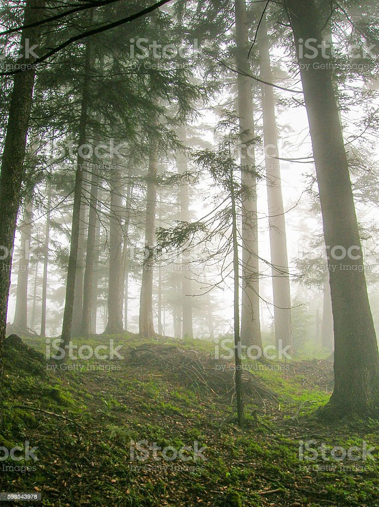 fog in the forest in the Swiss Alps photo libre de droits