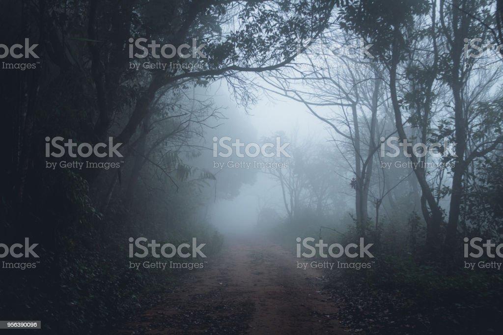 Nebel im Wald-Morgen-Kiefern – Foto