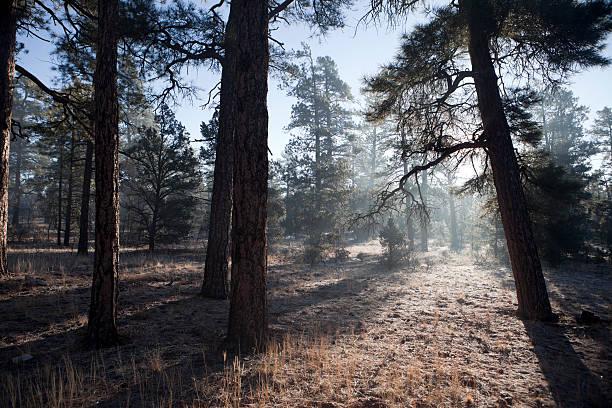 Brouillard dans la forêt. - Photo