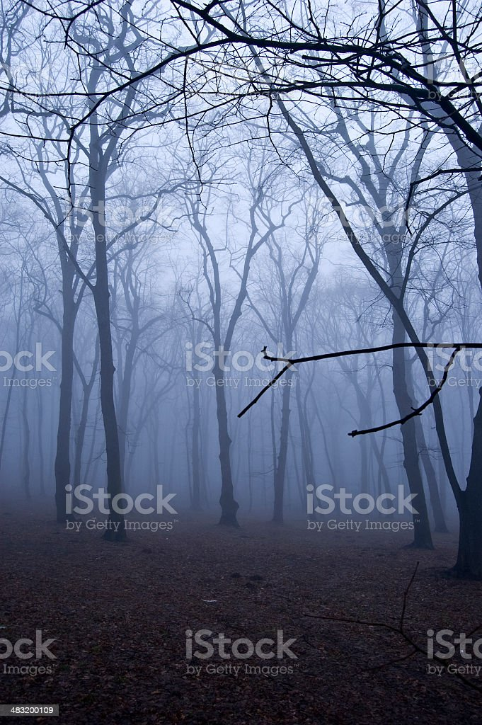 Fog in the forest. royalty-free stock photo