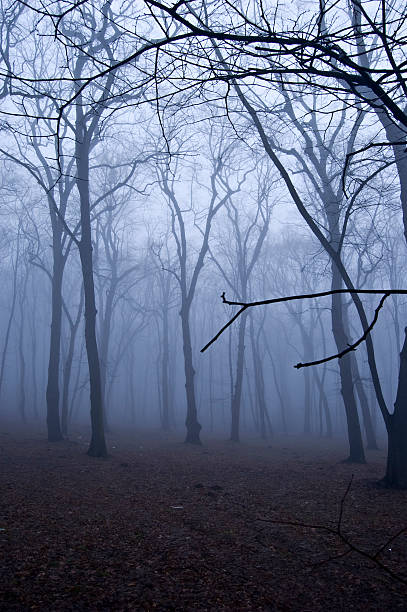 Fog in the forest. stock photo