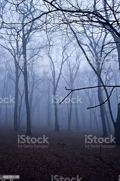 Fog In The Forest Stock Photo - Download Image Now