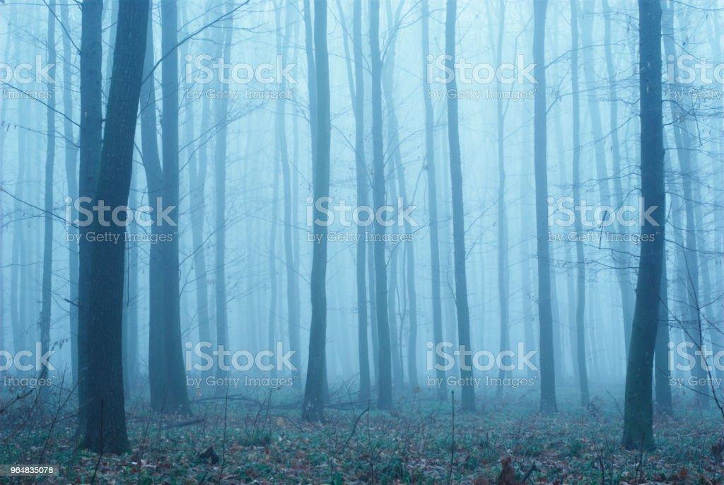 Nebel im Wald – Foto