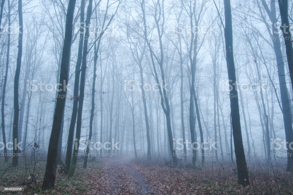 fog in the forest royalty-free stock photo