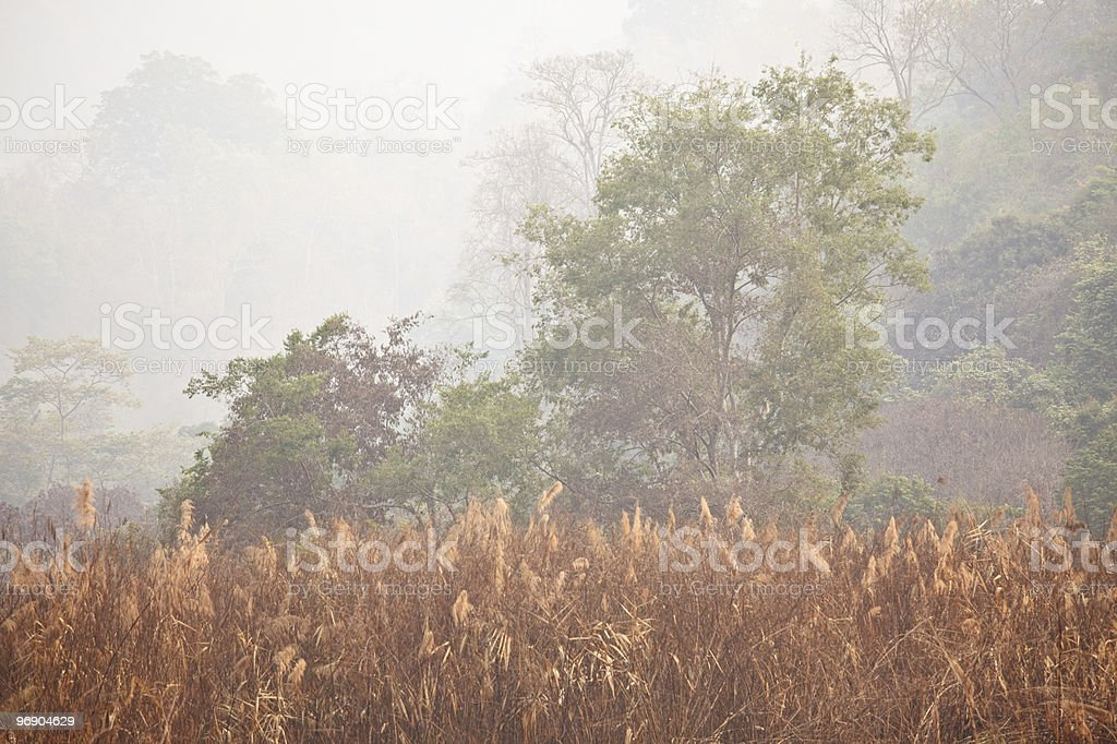 Fog in the morning. royalty-free stock photo