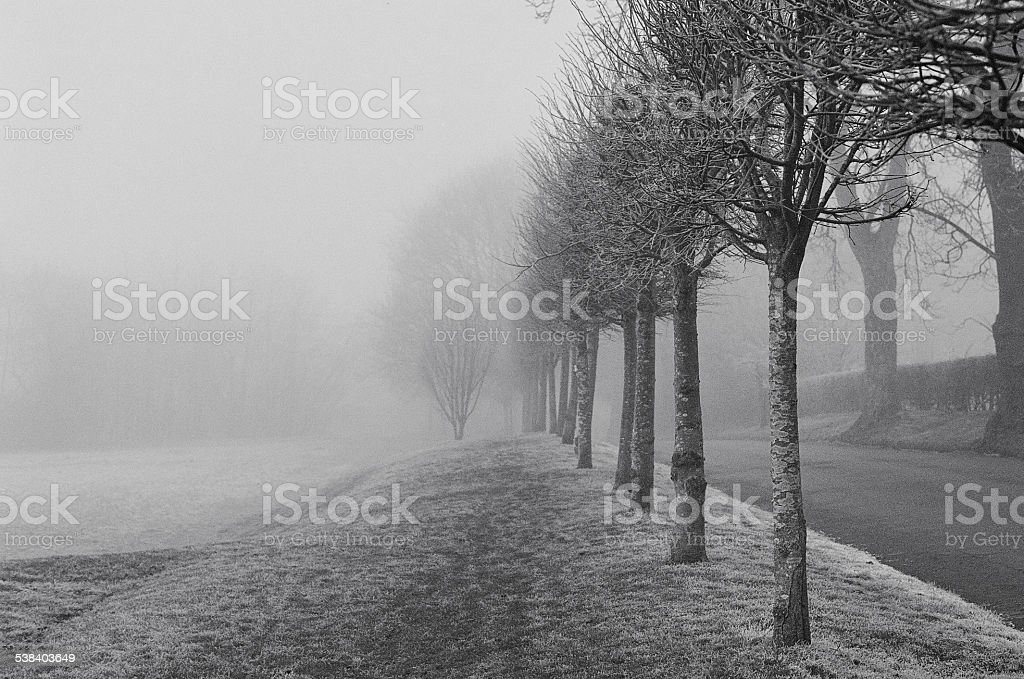 Fog in the park stock photo