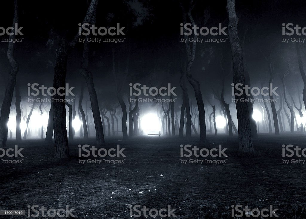 Fog in the pinewood stock photo