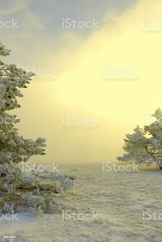 fog in winter forest royalty-free stock photo