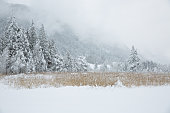 Beautiful snow-covered trees in the Alpine mountains, Weissensee, Carinthia, Alps, Austria
